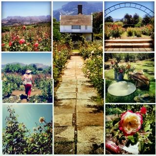 #ThingsiLove: The Chart Farm, Cape Town.