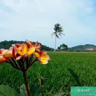 Instagramming Mersing, Malaysia.