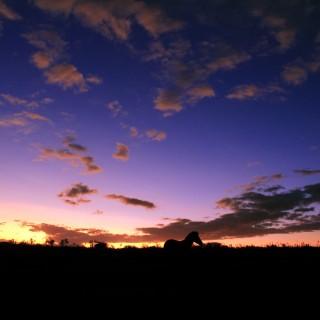 Zebra-silhouette-at-sunset