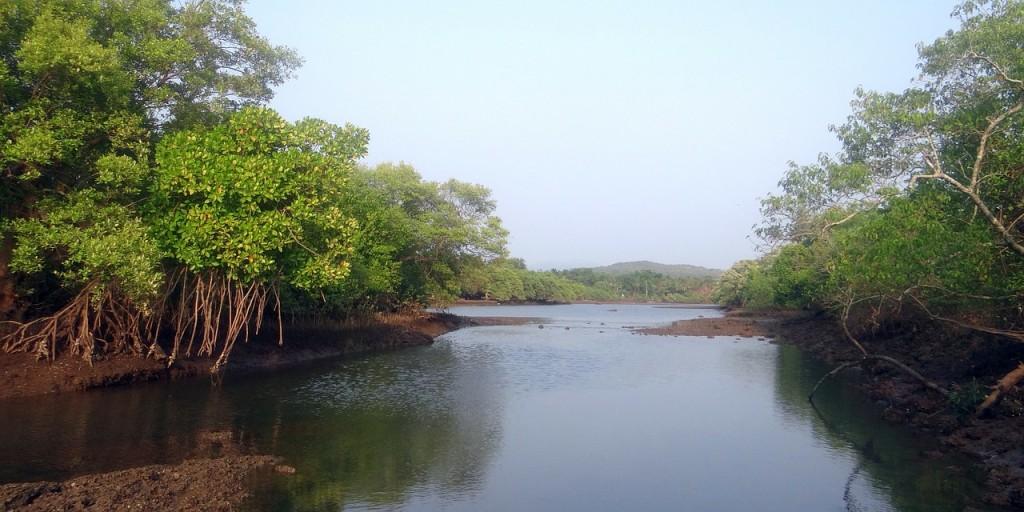 mangrove-species-254419_1280