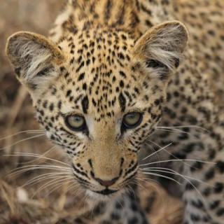 A perfect Safari at Jackalberry Lodge